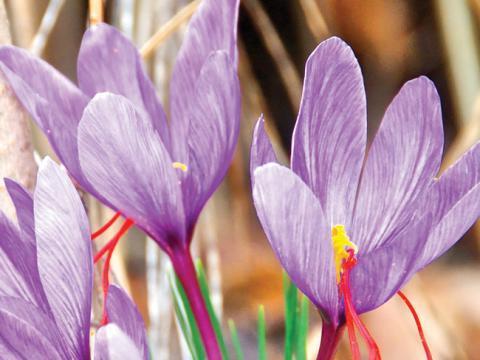 Acheter Griffonia Simplicifolia - Trouble anxieux généralisé : prise en charge - Anxiete.fr