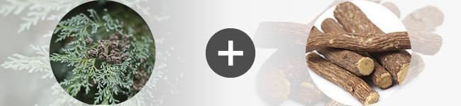 Télécharger des applications de rencontres gratuites pour mobile